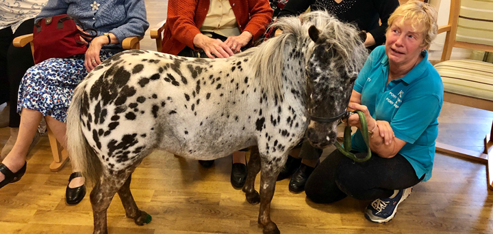 Horse in wellbeing centre
