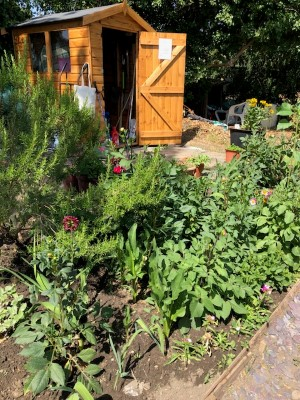 thriving allotment