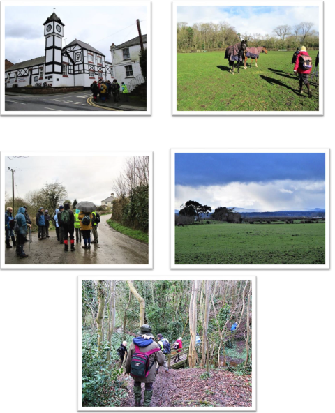 Wirralside Walkers  Shotwick and Saughall