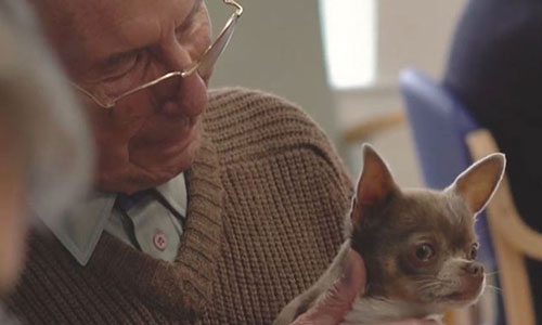 Older man with glasses and moustache holding small dog